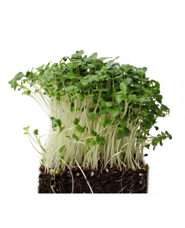 Phood Farm Brocolli Microgroente