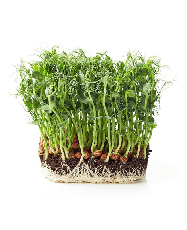 Phood Farm Erwtsheuten micro groente