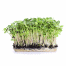 Phood Farm zonnebloem microgroente