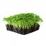 phood farm boerenkool microgreens
